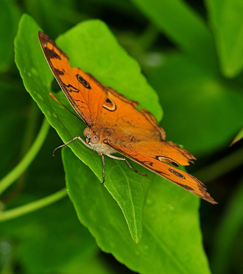 dec 11 8241 butterfly
