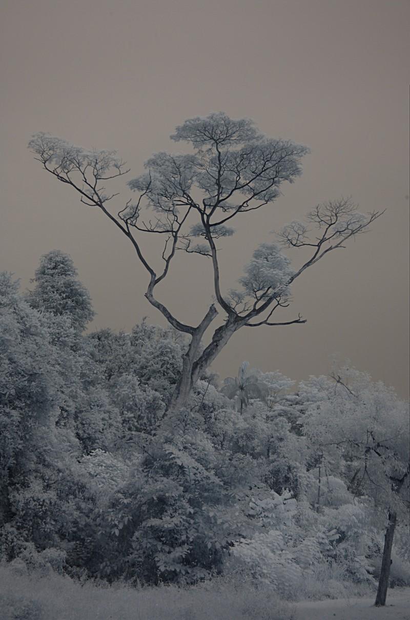 dec 11 9625 IR tree