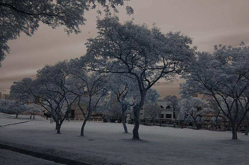 dec 11 9689 trees