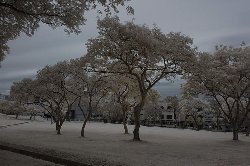 dec 11 9689 trees rb rev