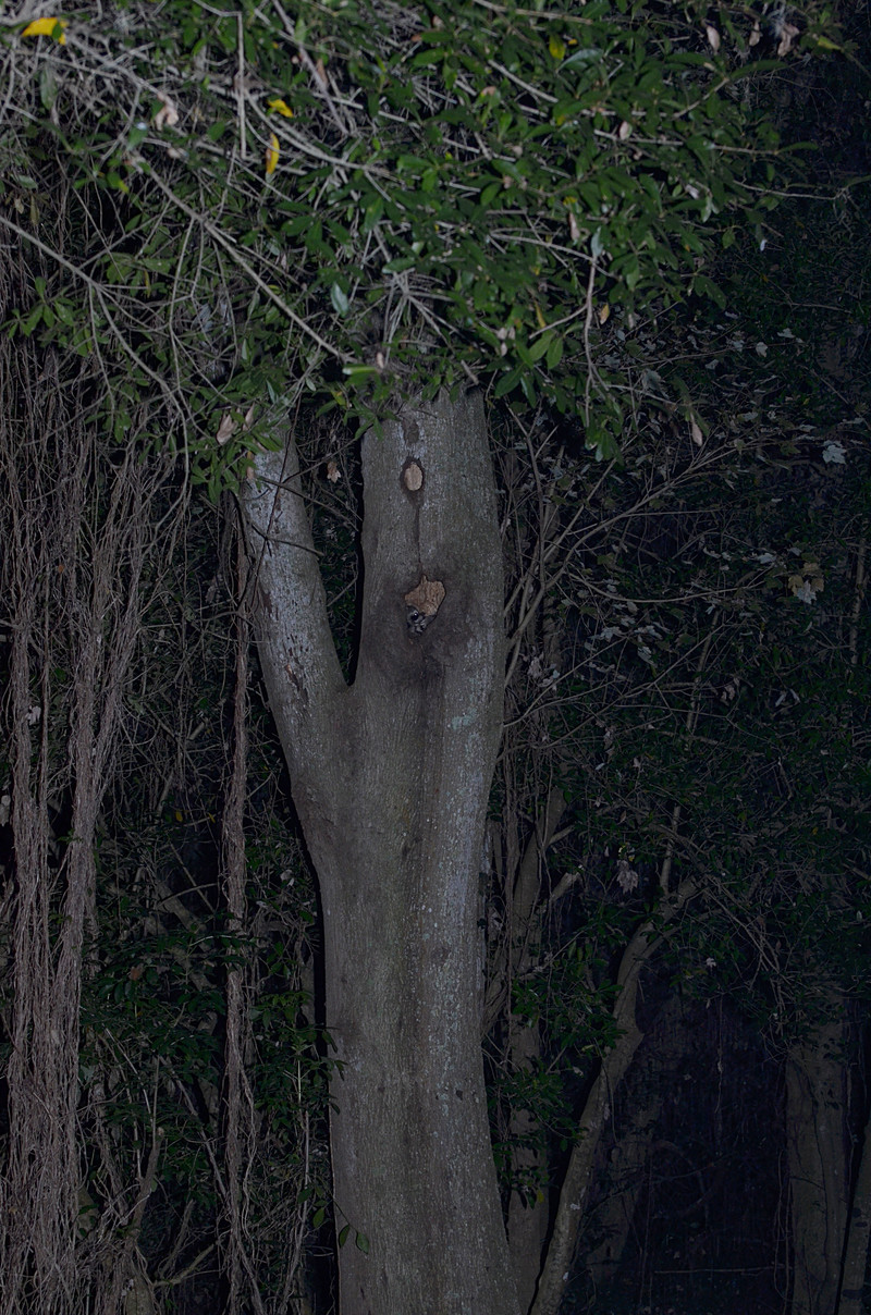 dec 14 2305 tree