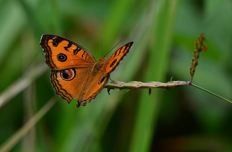 dec 15 5174 butterfly