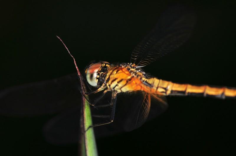dec 19 8485 morning dragonfly
