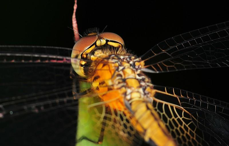 dec 19 8498 behind dragonfly eye