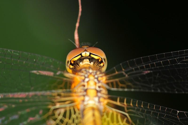 dec 19 8503 behind dragonfly eye