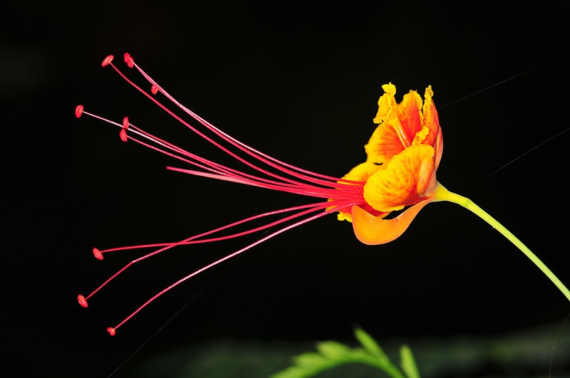 dec 19 8506 flower