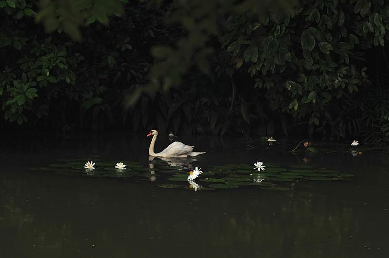 dec 19 8522 swan