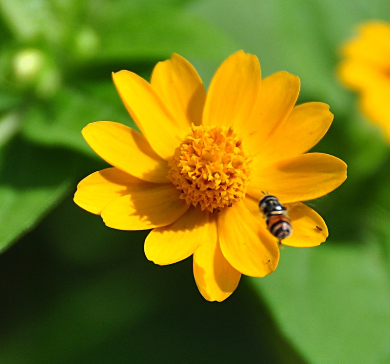 dec 21 2399 hoverfly