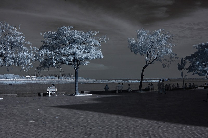 dec 21 9799 two trees