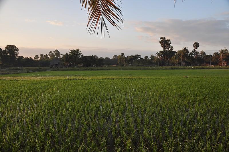 dec 23 2483 morning rice