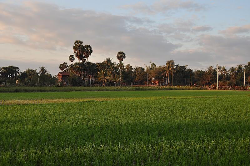 dec 23 2485 morning rice