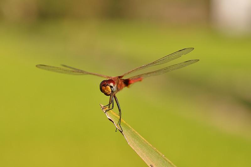 dec 23 2590 dragonfly