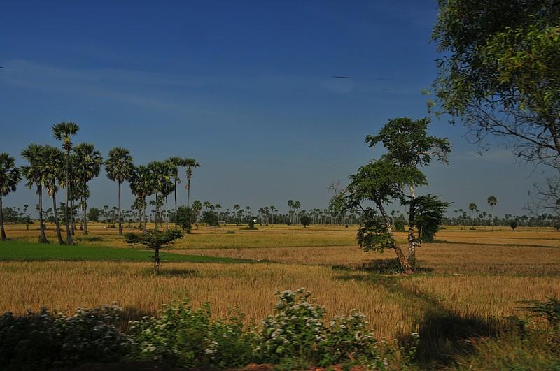 dec 23 8987 ricefields