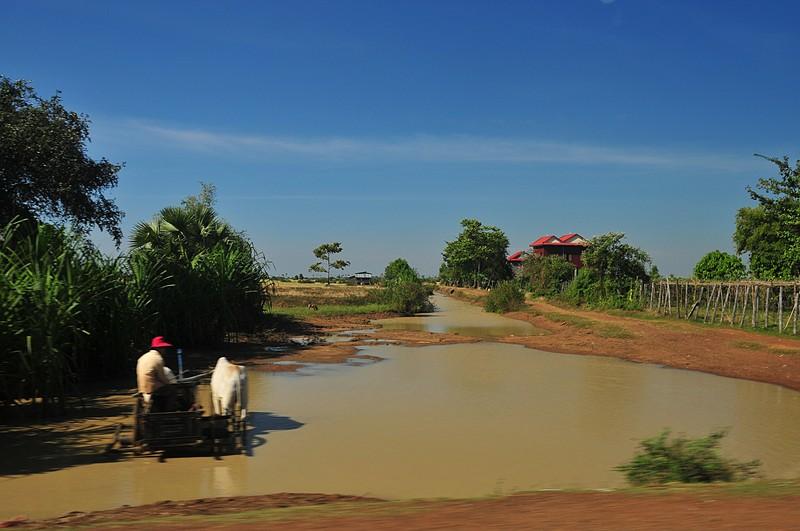 dec 23 9019 rice cultivation
