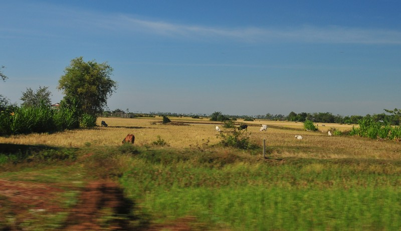 dec 23 9026 rice fields
