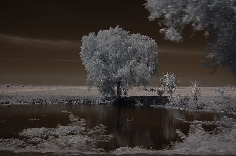 dec 23 9871 tree