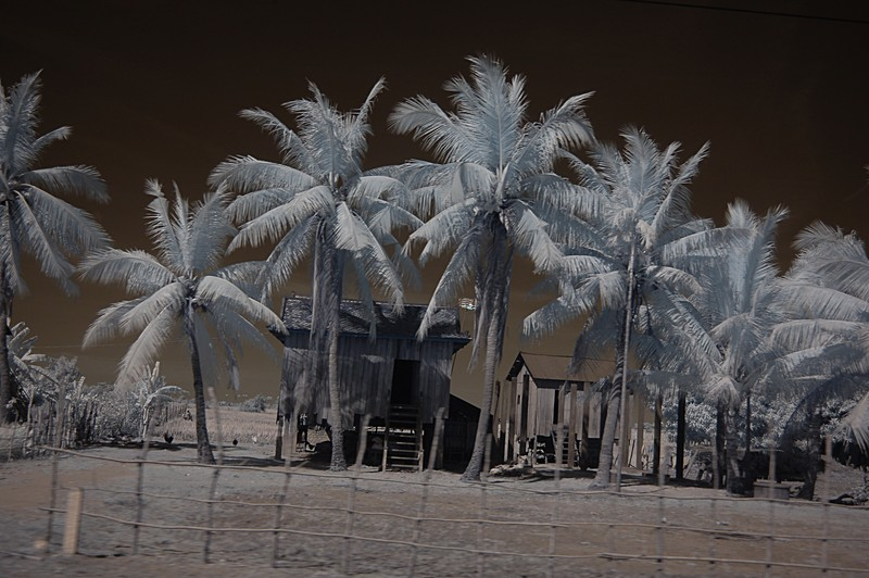 dec 23 9944 palm array