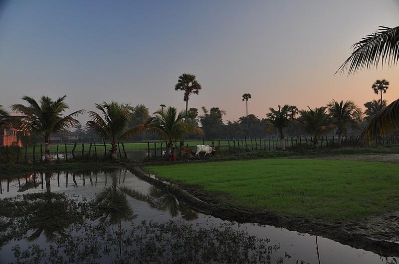 dec 24 2802 rice fields