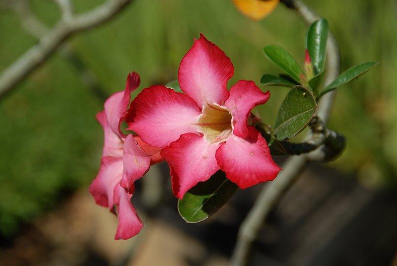 dec 24 9947 kwai flower