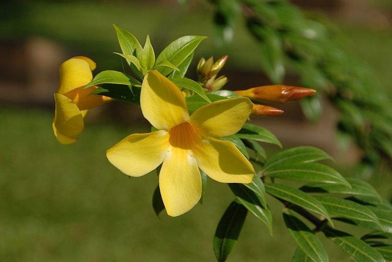 dec 24 9950 yellow flower
