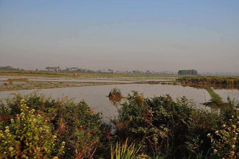 dec 25 3157 rice fields
