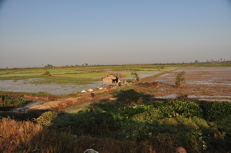 dec 25 3164 rice fields green