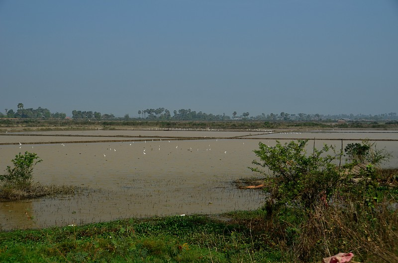 dec 25 9562 rice birds