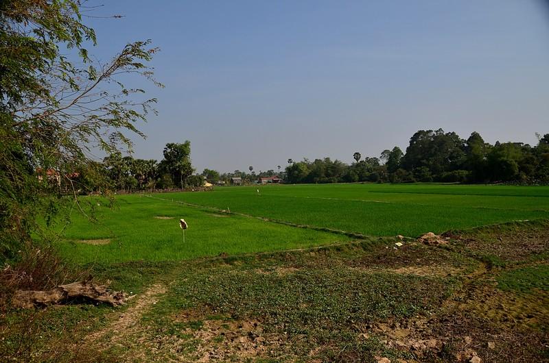 dec 25 9592 rice field
