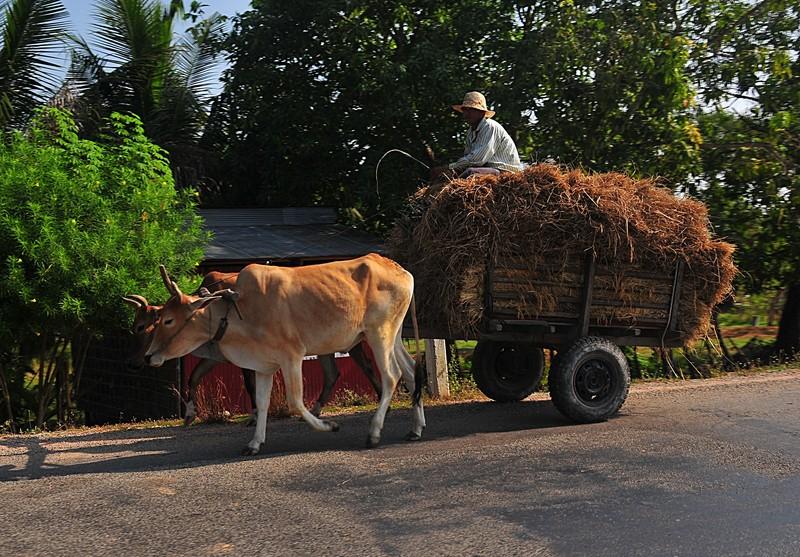 dec 25 9908 hauling rice