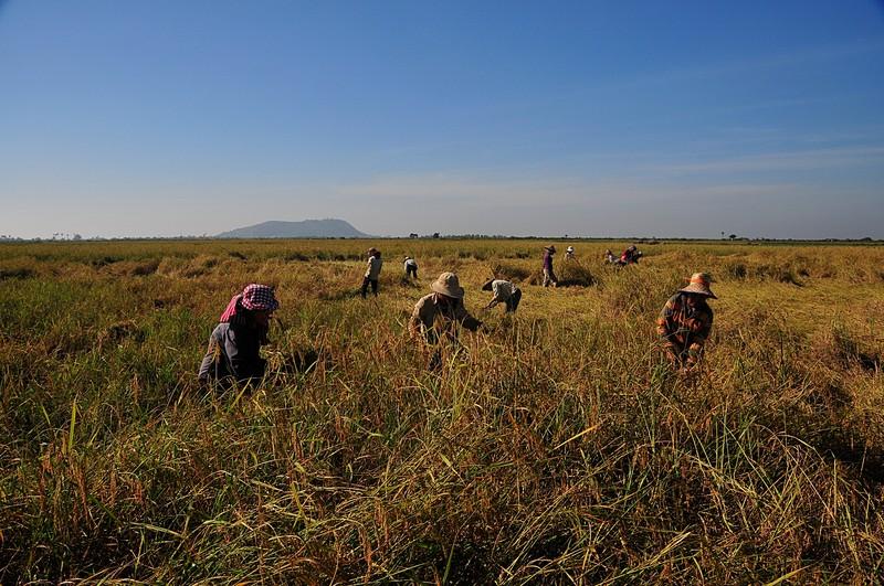 dec 27 0910 harvesting