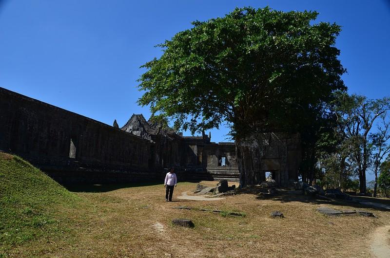 dec 27 0939 temple tree
