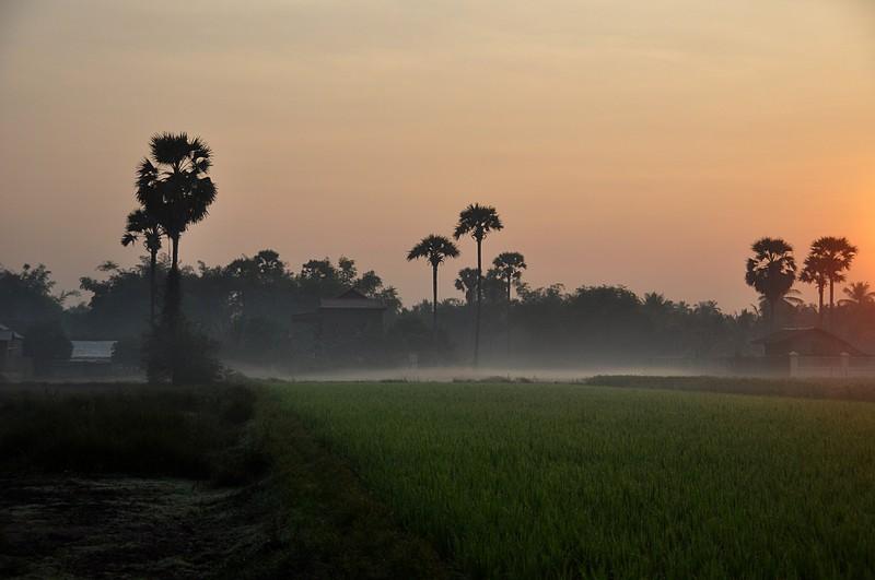 dec 27 4099 rice mist