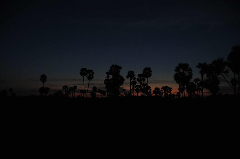 dec 28 1189 sunrise palms