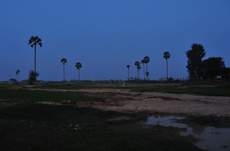 dec 28 1196 morning rice field