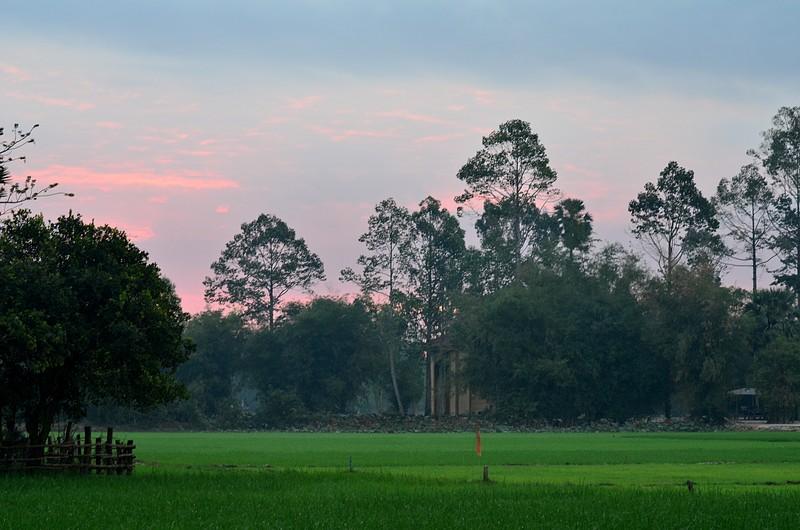 dec 28 1701 green rice field