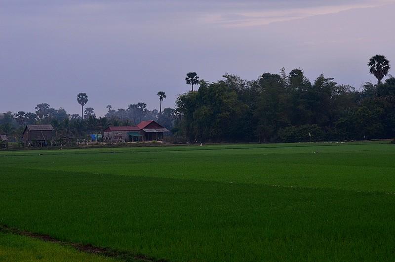 dec 28 1714 rice fields