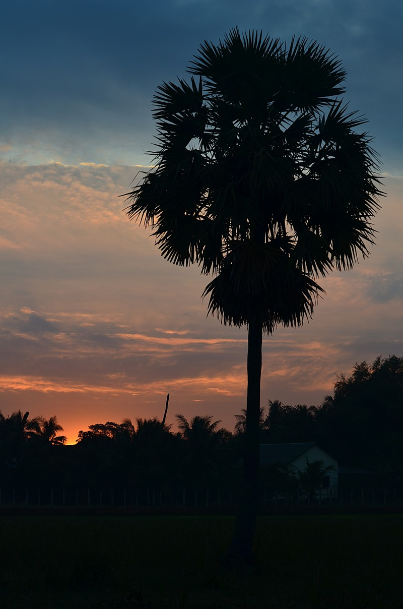 dec 28 1735 sun palm