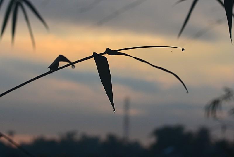 dec 28 1752 bamboo drops