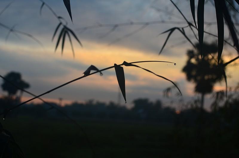 dec 28 1759 bamboo drops