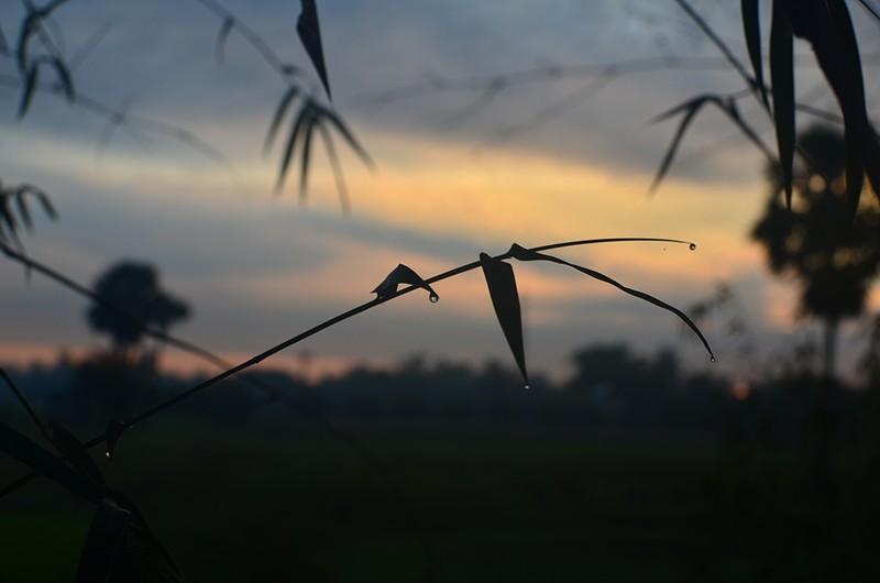 dec 28 1762 bamboo drops