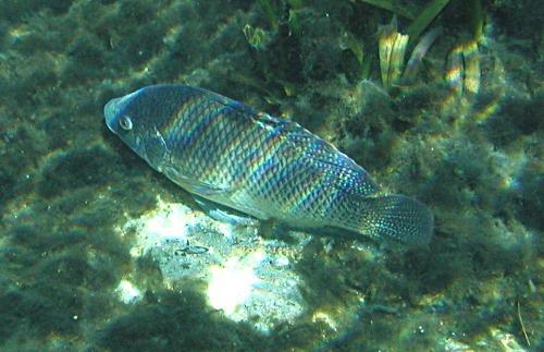 dec_28_resting_fish.jpg