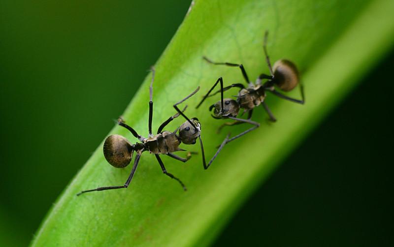 dec 29 8036 ant confrontation