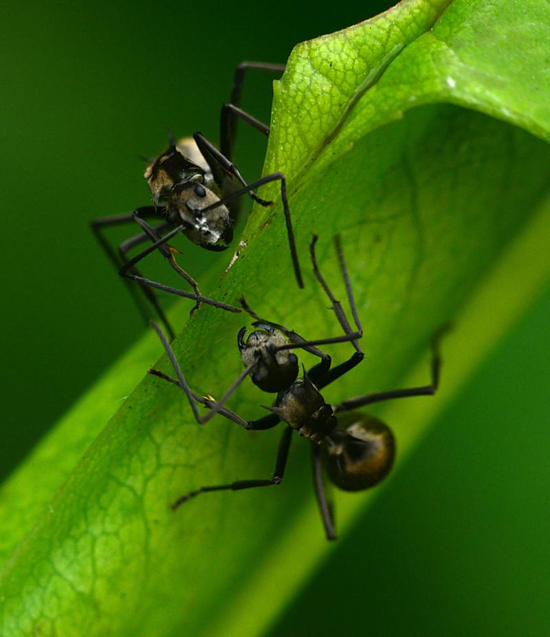 dec 29 8051 ant confrontation