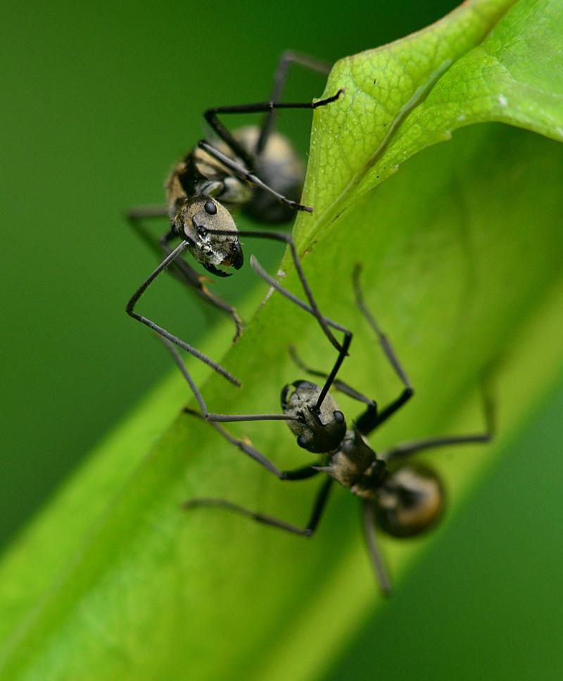 dec 29 8058 ant confrontation
