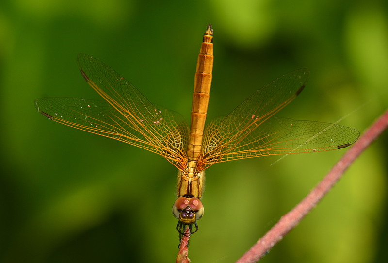 dragonfly essays Buy the best research paper from the most trustworthy research paper writing service online visit essaydragonscom today  if you want to buy an essay, thesis .