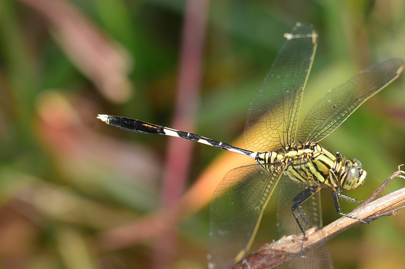 dragonfly essays One of the many rewards of birding is the opportunity to observe the natural world firsthand as yogi berra says, you can observe a lot by just watching.