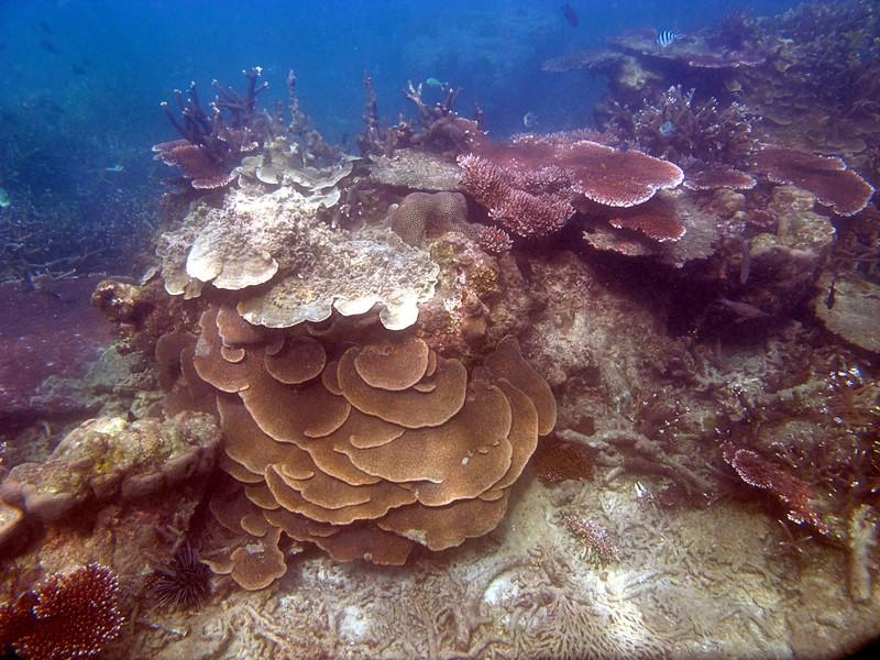 feb 04 1946 coral