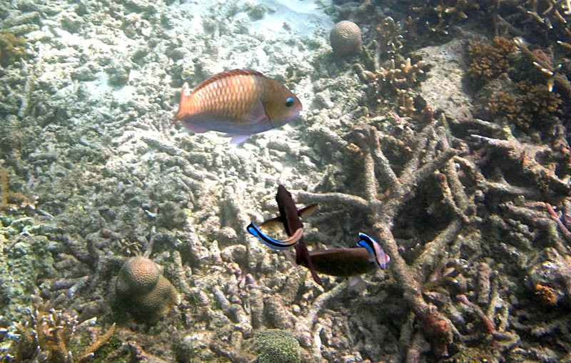 feb 04 1953 fish