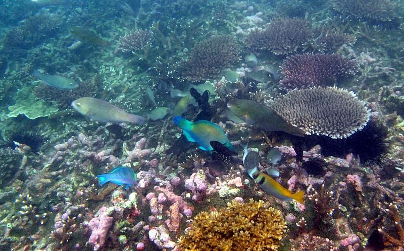 feb 04 1990 many fish