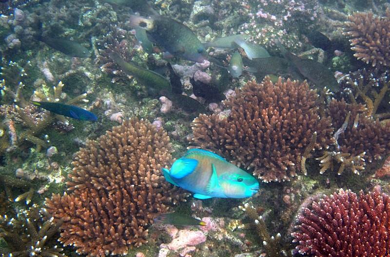 feb 04 1993 parrot fish